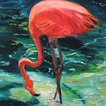 Flamingo Of Homasassa by Patricia Arroyo