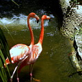 Flamingo Pair by Terri Mills