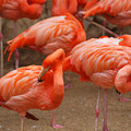 Flamingo Party by Teresa Blanton
