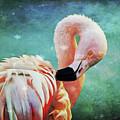 Flamingo Portrait by Angela Doelling AD DESIGN Photo and PhotoArt