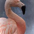 Flamingo Profile by Mickey At Rawshutterbug