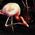 Flamingo Scratching Head by Sally Weigand