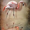 Flamingo by Svetlana Sewell
