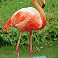 Flamingo by Tammy Lee Bradley