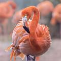 Flamingo, The Orange Beauty by Rima Biswas