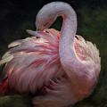 Flamingo by Zsuzsanna Szugyi