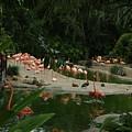 Flamingos 2 San Diego Zoo by Phyllis Spoor