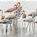 Flamingos Family by Galeria Trompiz