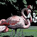 Flamingos I by Jim And Emily Bush