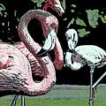 Flamingos II by Jim And Emily Bush