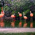 Flamingos II by Susanne Van Hulst