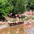 Flamingos by Ludy Ortiz