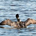 Flapping Wings by Linda Kerkau