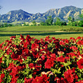 210546-v-flatirons And Flowers V  by Ed  Cooper Photography