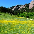 Flatirons And Yellow Meadow by George Tuffy