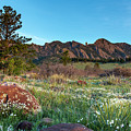 Flatirons Sunrise by Philip Rodgers