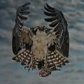 Fleck The Osprey  by Bob Williams