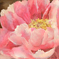 Fleeting Glory - Peony by Audrey Jeanne Roberts