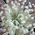 Fleur De Feu 3 by Shannon Turek