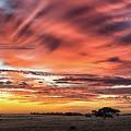Fleurieu Rural Sunrise by Grant Petras