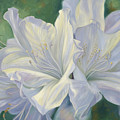Fleurs Blanches by Lucie Bilodeau