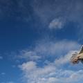 Flier by Rick Takagi