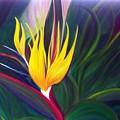 Bird Of Paradise by Dina Holland