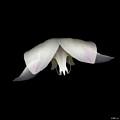 Flight by Heather Kirk