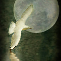 Flight by Kym Clarke
