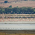 Flight Of The Flamingos by John  Nickerson