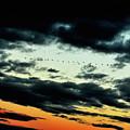 Flight Of The Geese by Lori Tambakis