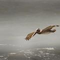 Flight Of The Pelican by Joseph G Holland