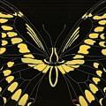 Flight Series 11 Yellow Tail by Iamthebetty Tbone