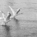 Flight by Victor Aga