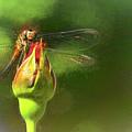 Flighty Dragonfly by Ola Allen