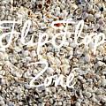Flip Flop Zone Seashell Background by Edward Fielding
