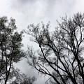 Flirtation Of Trees by Donna Blackhall