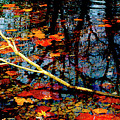 Floating Fall Colors by Paul W Faust - Impressions of Light
