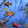 Floating Foliage by Robert Potts