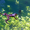Floating Frog by Nick Gustafson