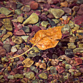 Floating Leaf by Teresa Wilson