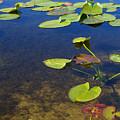 Floating Leaves by Zalman Latzkovich