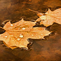 Floating Maple Leaves Pnt by Theo O'Connor