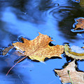 Floating On The Reflected Sky by Doris Potter
