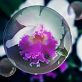 Floating Orchid by Pamela Walton