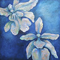 Floating Orchid by Shadia Derbyshire