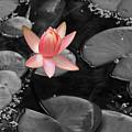 Floating Pink by Shari Jardina