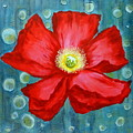 Floating Poppy by Brigitta Richter