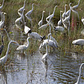Flock Of Different Types Of Wading Birds by Anthony Totah