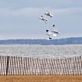Flock Of Gulls by Jeramey Lende